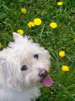 Azaria on on Summer Walk