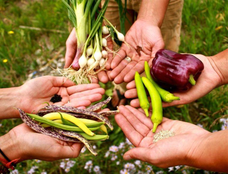 saving-seed
