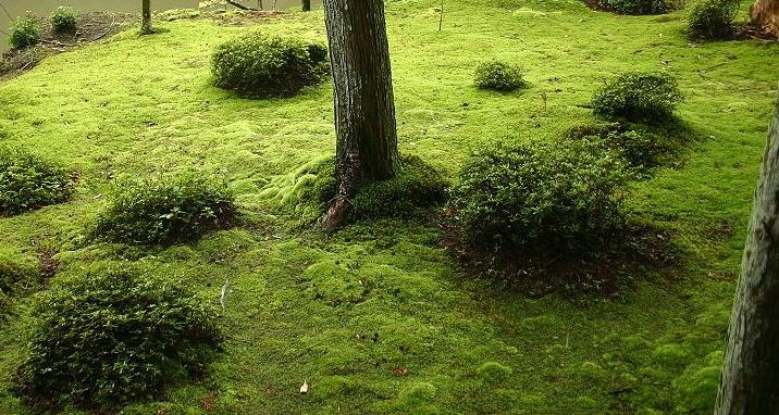 Urban Moss landscapes