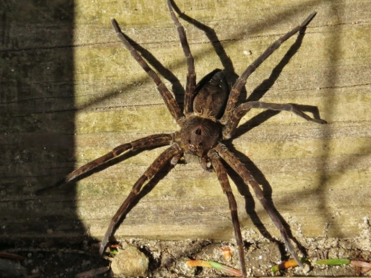 Spiders of CT