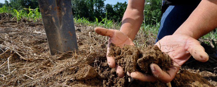 Analyze Soil